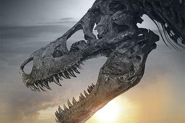 homevideo_dinosaur13.jpg.jpe