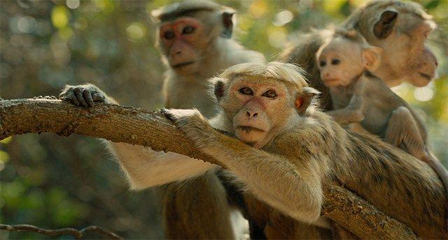 filmclips_monkeykingdom.jpg.jpe