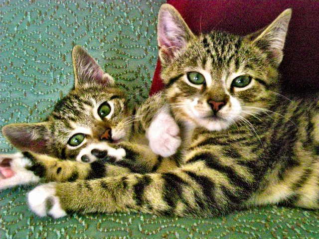 cats.jpg.jpe