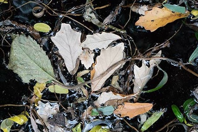 conniff_leaves_detail_web.jpg.jpe