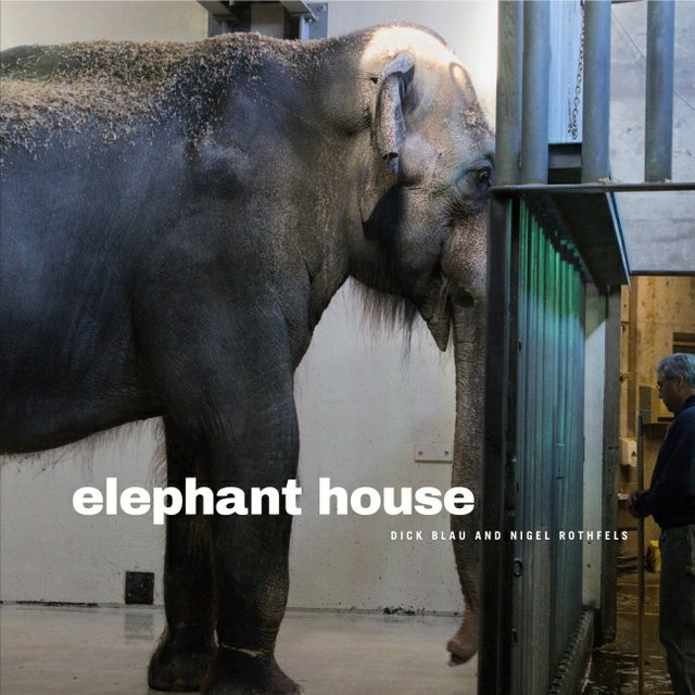 elephanthouse.jpg.jpe