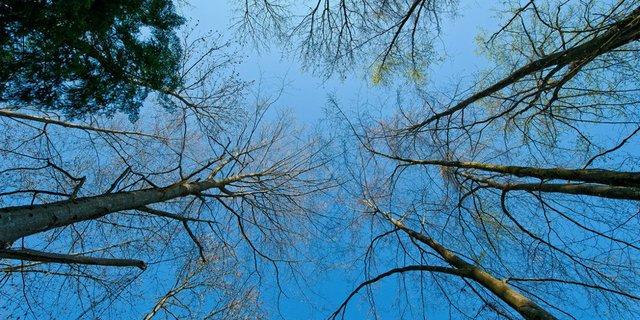 sanctuarywoods.jpg.jpe