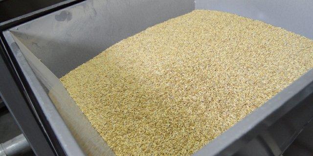 grain.jpg.jpe