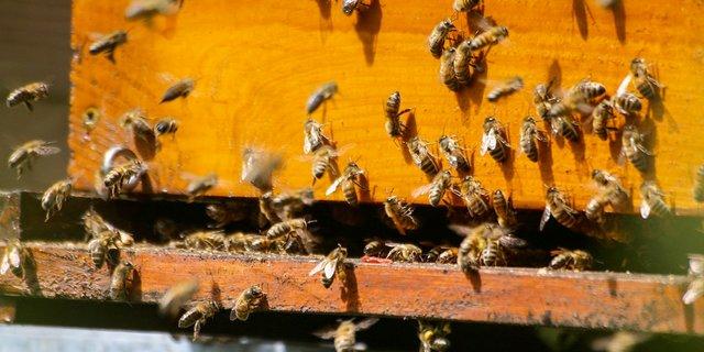 beekeepingnews2.jpg.jpe