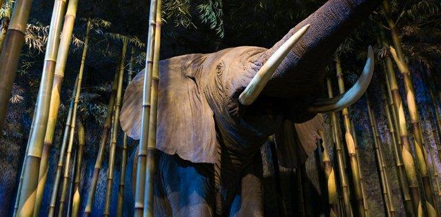 milwaukee public museum elephant.jpg.jpe