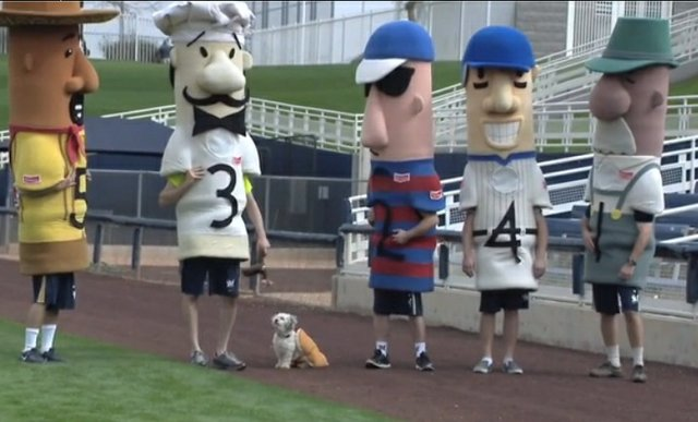 hank the dog sausage race.jpg.jpe