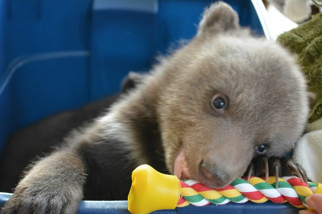bears use.jpg.jpe
