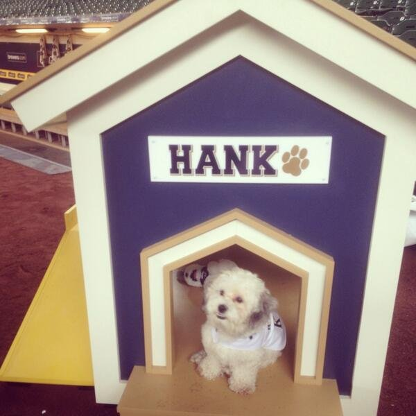 the hank house hank the dog miller park.jpg.jpe
