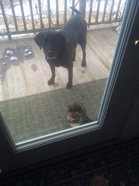 josie+and+cat.jpg.jpe
