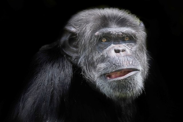 chimp.jpg.jpe