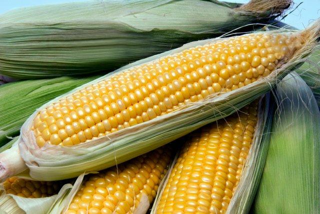 corn+on+the+cob.jpg.jpe