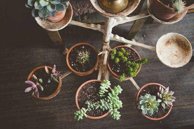 plants1.jpg.jpe