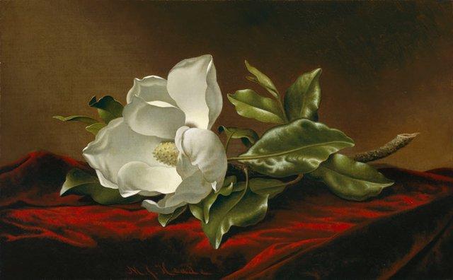 heade-magnolia-grandiflora.jpg.jpe