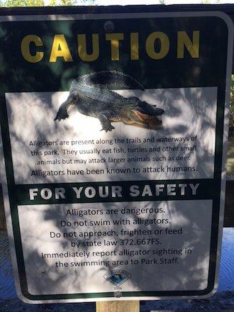 alligators.jpg.jpe