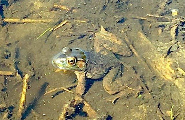 froggy.jpg.jpe