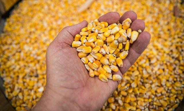 corn-by-Dennis-Schroeder-NREL.jpg