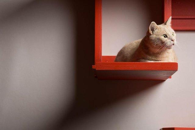 SipPurrCatCafe.jpg