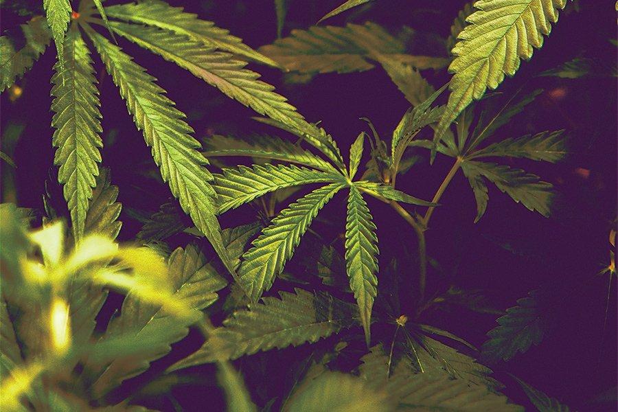 marijuana legalization gov