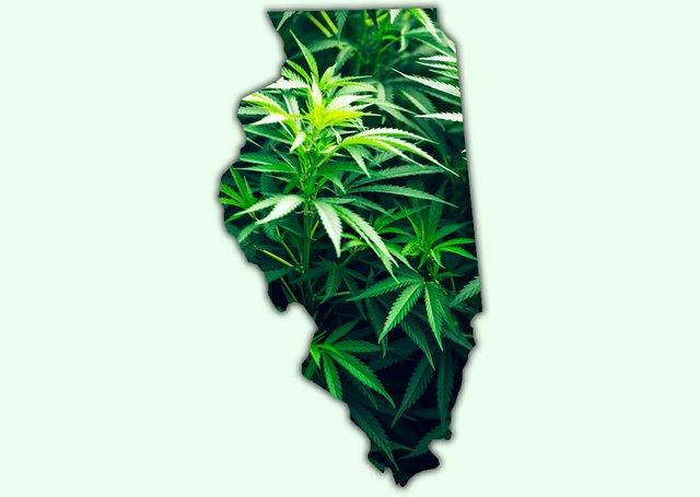 CannabisTwo_Illinois.jpg
