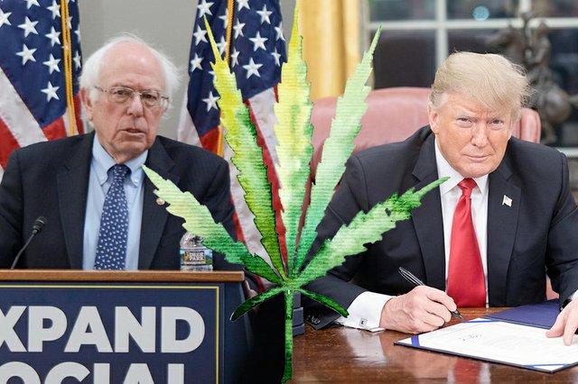 CannabisTwo_SandersTrump.jpg