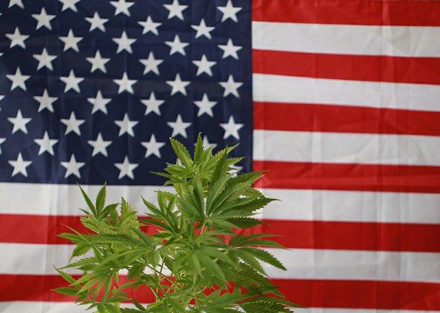 Cannabis2_amendment.jpg