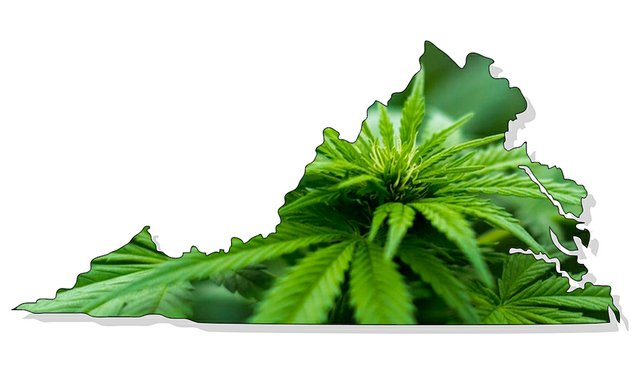 CannabisTwo_Virginia.jpg