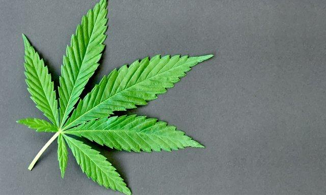 Cannabis_Vote.jpg