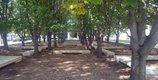 VisualArt_01a_treegrove_(JenniferCurrent).jpg
