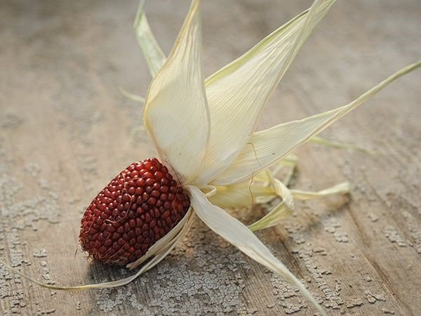 Strawberry Popcorn.jpg