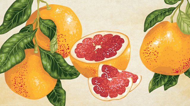food-drink_Grapefruits-(Background--Miodrag-Kitanovic-Getty-Images-AND-illustrations-by-Yulia-Fushtey-Getty-Images).jpg