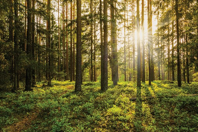 news_Earth Day_Forest(llvllagic:Getty Images).jpg