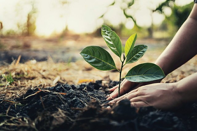 news_Earth Day_Planting a Tree(lovelyday12:Getty Images).jpg