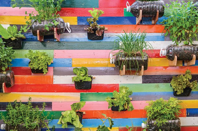 special_Home & Garden_Plant Herb Wall(boonsom:Getty Images).jpg